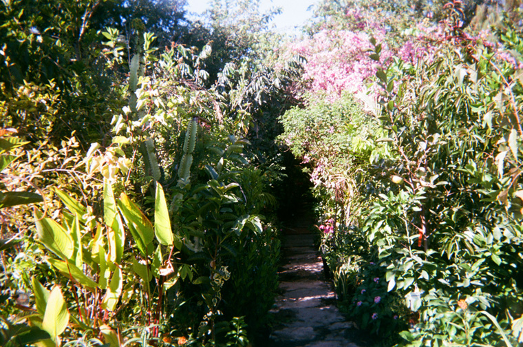 pathway through a lush garden